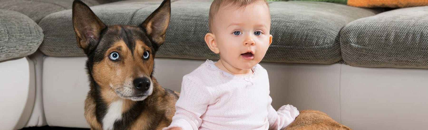 Dog with blue eyes sitting with baby