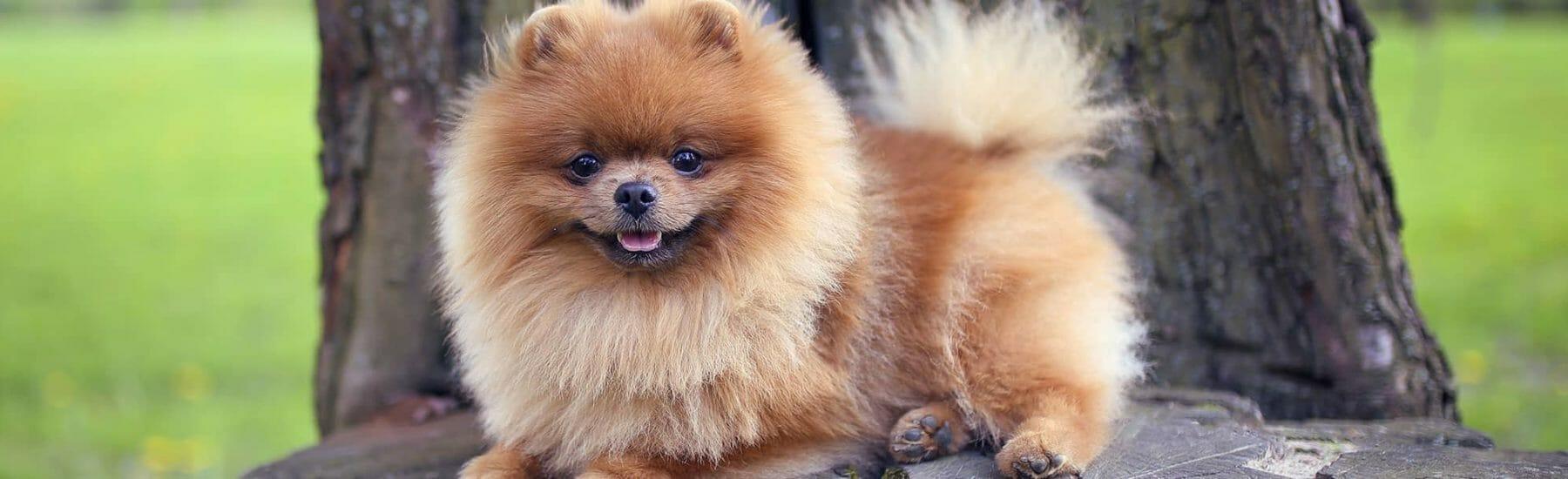 Fluffy dog sitting on a stump